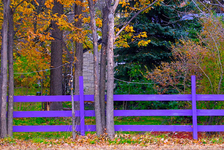 Purple Fence in the woods