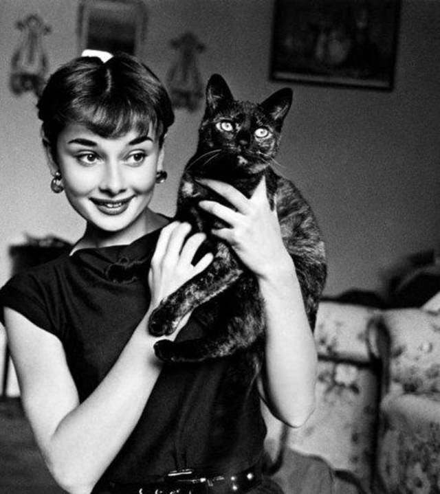 Famous Figures With Their Cats Audrey Hepburn