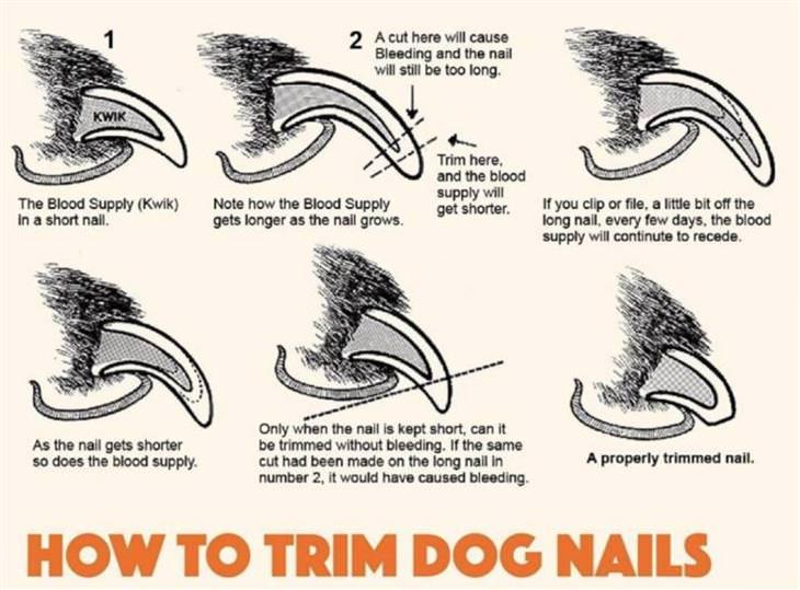 Visual Guides dog nail clipping