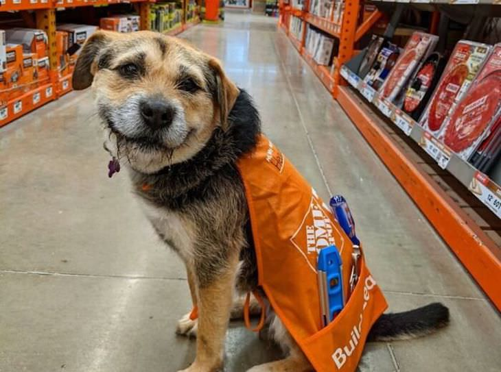 Adorable and Hilarious Dogs Spotted Out and About shop