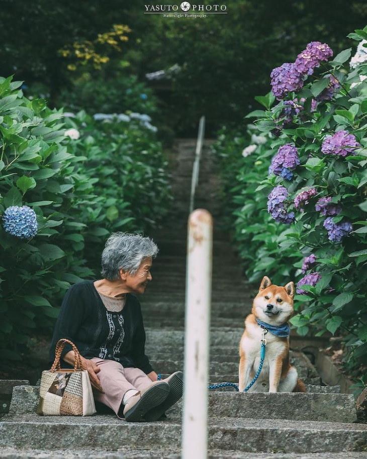 Grandma and Her Shiba Inu sitting on a staircase