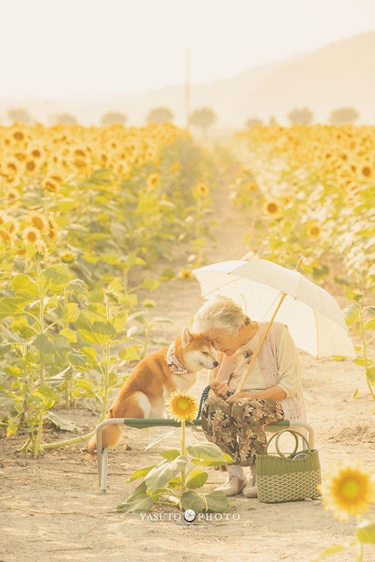 Grandma and Her Shiba Inu sunflowers