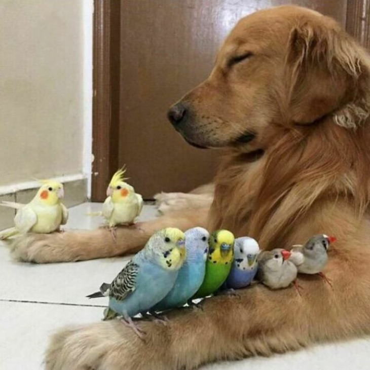 Cute Animals dog and parrots