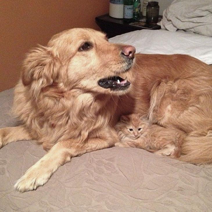 Animal Lookalikes dog and kitten