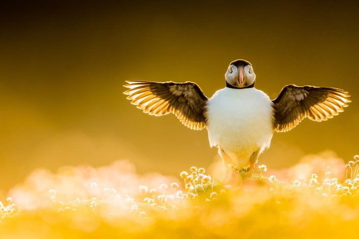 """2021 Bird Photographer of the Year Contest Winners """"Wing Stretch"""" by Kevin Morgans, United Kingdom"""