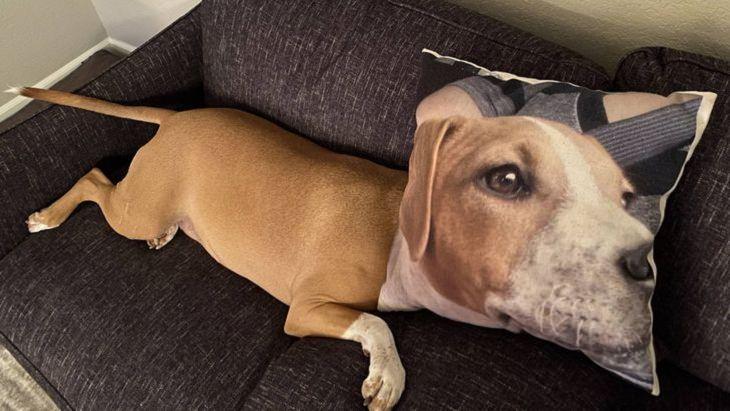 Look Twice pics, dog