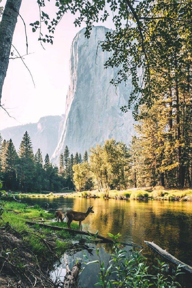 Fairytale-Like Pics, deer, lake,