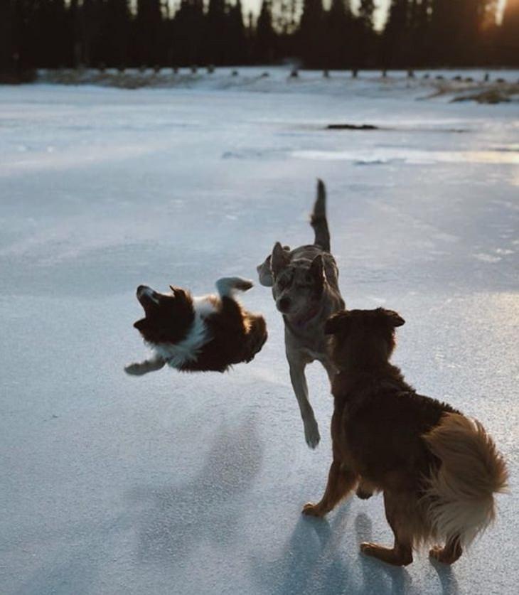 Seconds Before Disaster, dog crash