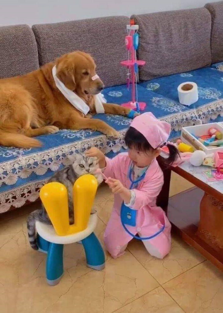 Funny Animals playing doctor