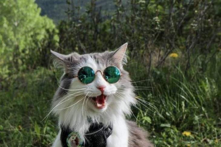 Funny & Cute Animal Pics, cat, sunglasses