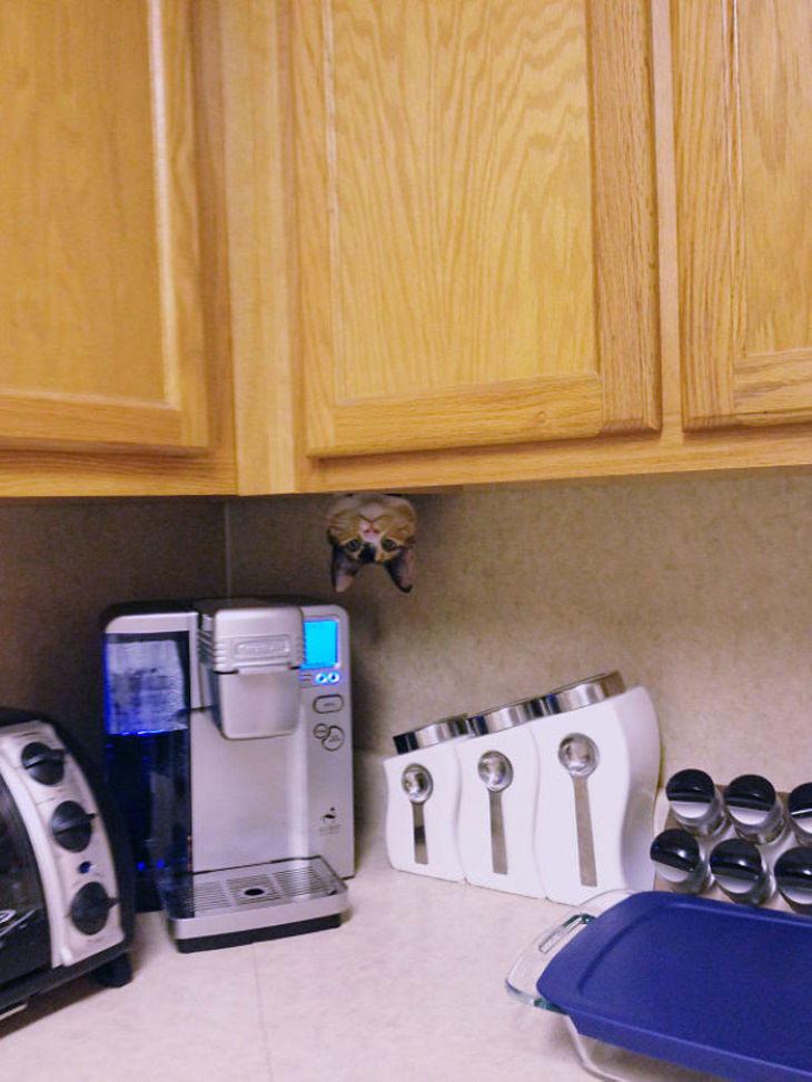Ninja Cats kitchen upside down cat
