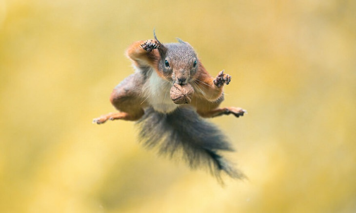 Perfectly Timed Action Shots of Animals, squirrel