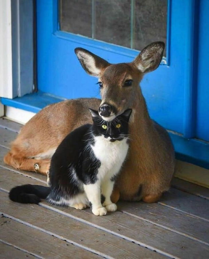 Funny Animals fawn and cat