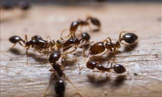 Natural Ways of Keeping Ants at Bay