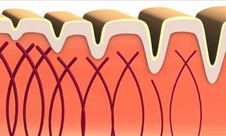 Collagen - One of the Most Important Proteins in the Body