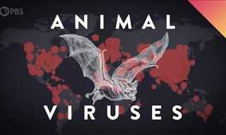 Discover How & Why Viruses Jump From Animals to Humans
