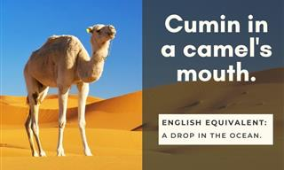 15 Idioms From Overseas That Sound Hilarious in English