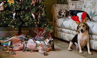 21 Mischievous Christmas Pets