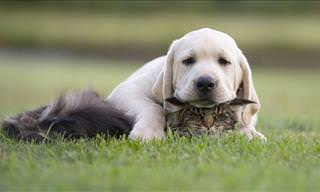 Who Says That Cats and Dogs Do Not Get Along?