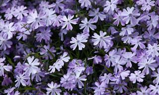 8 Stunning Spring Flowers