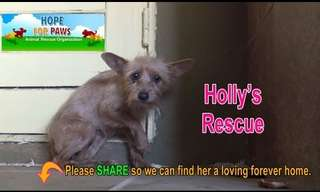 Animal Rescue: Story of Holly...