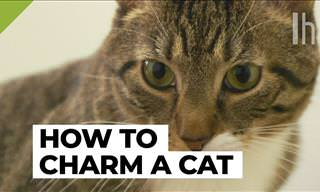 Animal Advice: How to Make Any Cat Like You