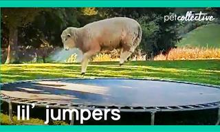 Watching These Little Jumping Animals Will Melt Your Heart