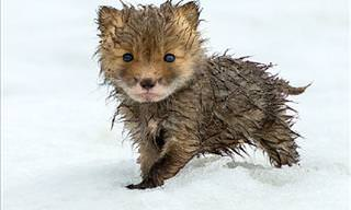 These Cute Baby Animals Will Warm Your Heart