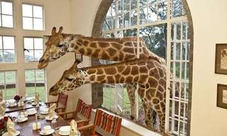 The Giraffe Manor - Fantasy Destination!