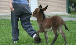 When It Comes to Donkeys, Smaller is Definitely Cuter