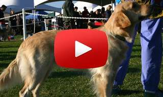 How to Win an Obedience Show