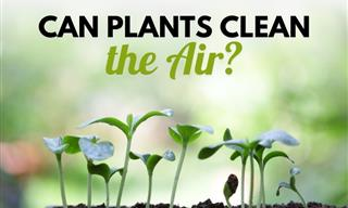 Can Indoor Plants Really Purify the Air in a Room?