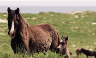 A 500-Strong Feral Horse Population Roams This Island