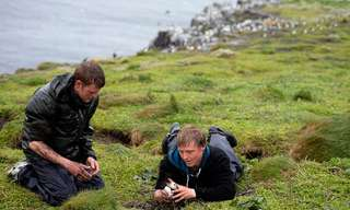 Counting Puffins on Farne Islands - Beautiful!