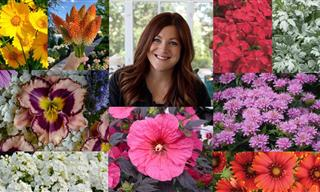 15 Stunning Perennial Flowers That Can Stand the Heat!