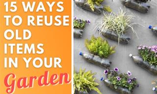 15 Easy Ways to Repurpose Household Waste in the Garden