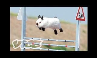 This Bunny Jumping Competition is the Cutest Thing EVER!