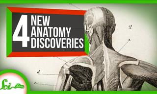 These Body Parts Were Discovered In The Last 10 Years!