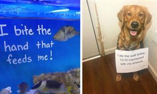 These 15 Hilariously Naughty Pets Were Caught in the Act