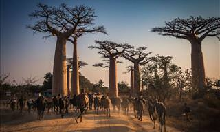 Amazing Madagascar in 16 Especially Beautiful Pictures