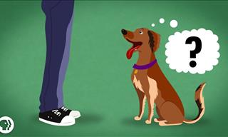 Know How Dogs Actually Know What We Might Be Thinking