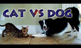 Cat vs. Dog - The Ultimate Contest!