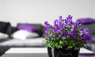 15 Plants to Grow In Each Room of Your House