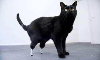 Animals Restored With Prosthetics