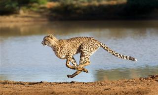 You Will Be Amazed at the Terrific Speed of These Animals