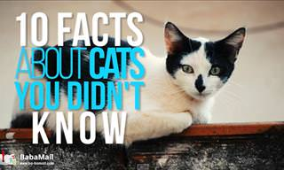 10 Awesome Cat Facts You Need to Know
