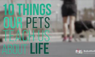 My Pet Has Taught Me Many Lessons About Life. Here's 10!