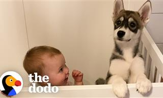 Adorable - Puppy and Baby Girl Grow Up Side by Side