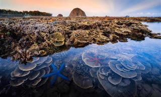 Highlights of the Royal Society of Biology's photography competition 2021