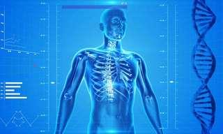 Human Body: Astounding Facts!